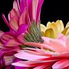 Flowers (78 of 78)