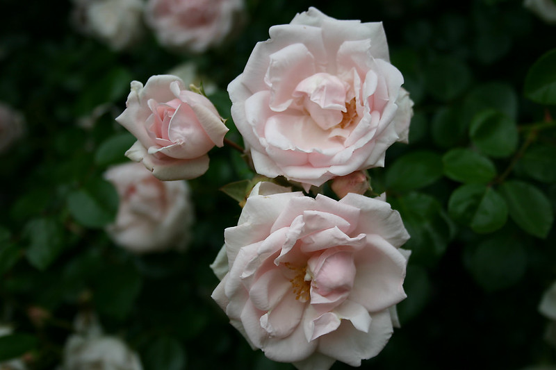 Flowers (2 of 78)