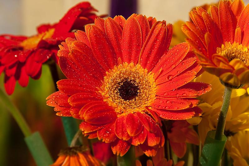 Flowers (60 of 78)