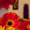 Flowers (49 of 78)
