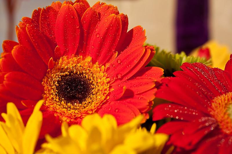 Flowers (45 of 78)