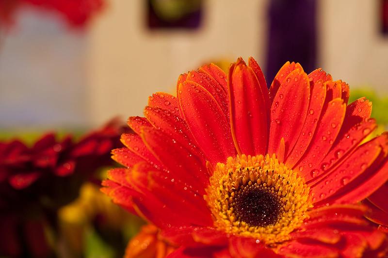 Flowers (44 of 78)