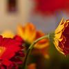 Flowers (48 of 78)