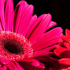 Flowers (77 of 78)