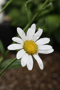 Flowers (25 of 78)
