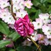 Flowers (6 of 78)
