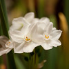 Flowers (38 of 78)