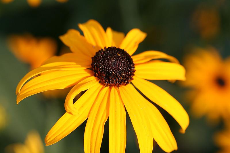 Flowers (10 of 78)