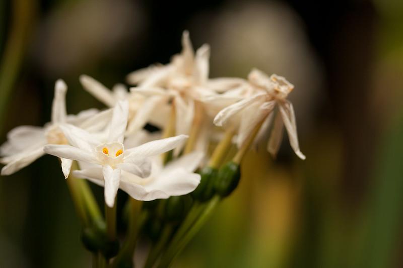 Flowers (35 of 78)
