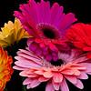 Flowers (75 of 78)