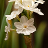 Flowers (39 of 78)