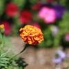 Flowers (26 of 78)