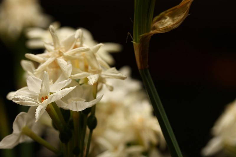 Flowers (34 of 78)