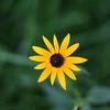 Flowers (9 of 78)