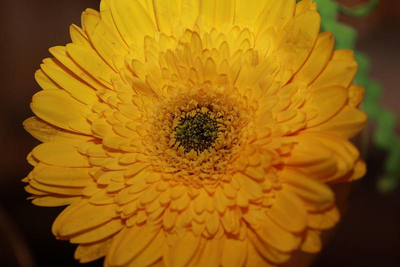 Flowers (16 of 78)