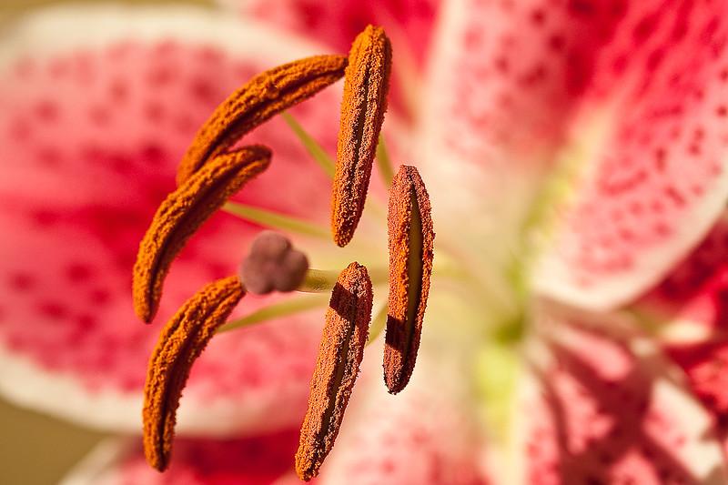 Flowers (68 of 78)