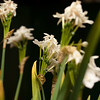 Flowers (36 of 78)