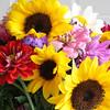 Flowers (28 of 78)