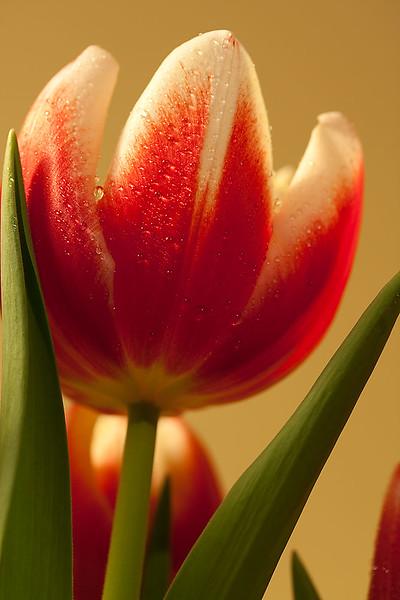 Flowers (58 of 78)