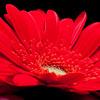 Flowers (76 of 78)
