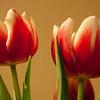 Flowers (54 of 78)