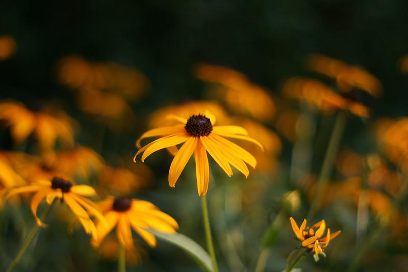 Flowers (8 of 78)