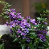 Flowers (4 of 78)