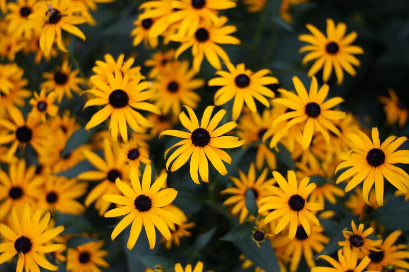 Flowers (11 of 78)