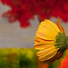 Flowers (46 of 78)