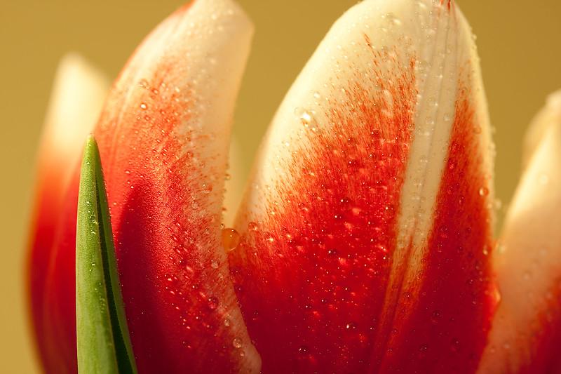 Flowers (56 of 78)