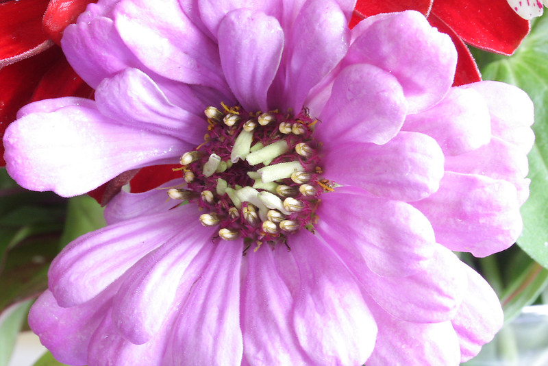 Flowers (32 of 78)