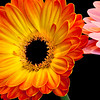 Flowers (74 of 78)