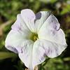 Flowers (7 of 78)