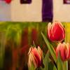 Flowers (51 of 78)