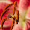 Flowers (67 of 78)