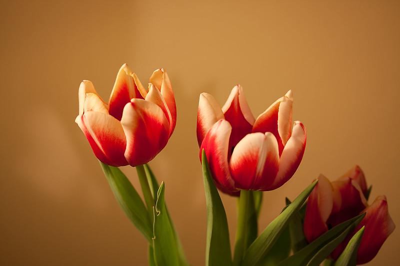 Flowers (53 of 78)