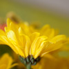 Flowers (70 of 78)