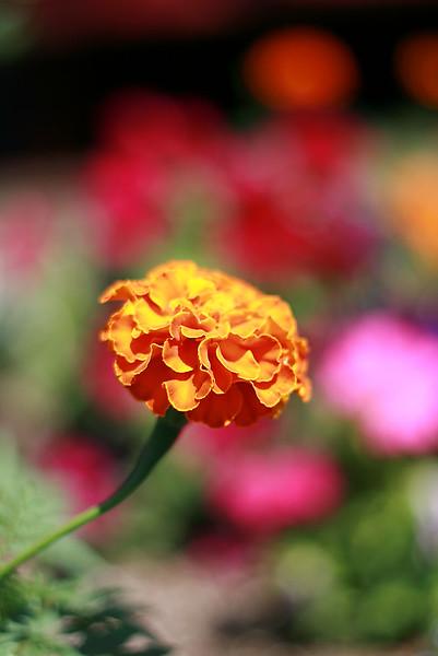 Flowers (27 of 78)