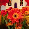 Flowers (61 of 78)