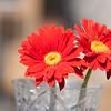 Flowers (72 of 78)