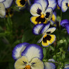 Flowers (3 of 78)