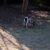 2009-01-18.More Backyard Dogs.044-95