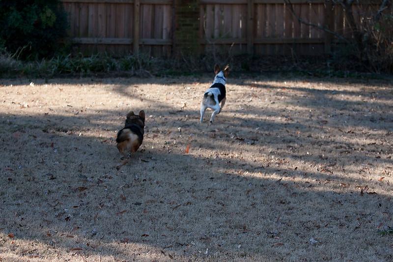 2009-01-18.More Backyard Dogs.052-96