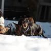 2009-03-01.more snow.149-2-15
