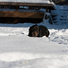 2009-03-01.more snow.126-2-11