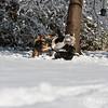 2009-03-01.more snow.311-34
