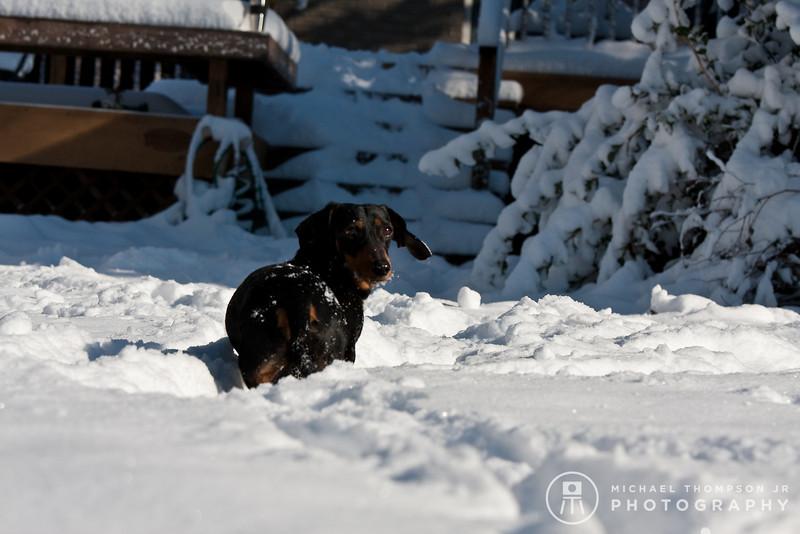 2009-03-01.more snow.137-2-14
