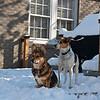 2009-03-01.more snow.025-41
