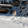 2009-03-01.more snow.179-2-19
