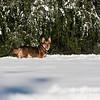 2009-03-01.more snow.270-32